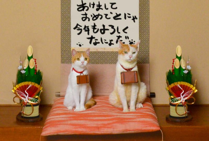 Nyalan_jalan_cats_02