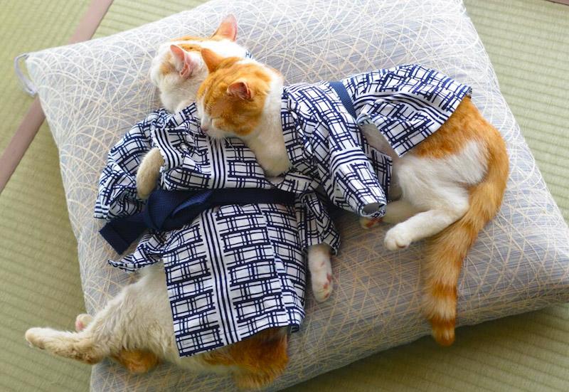 Nyalan_jalan_cats_03