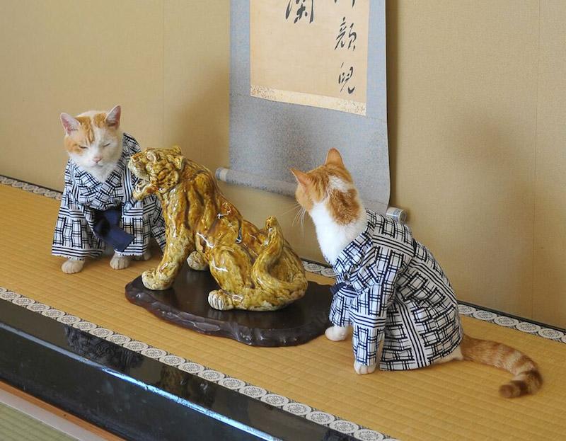 Nyalan_jalan_cats_04