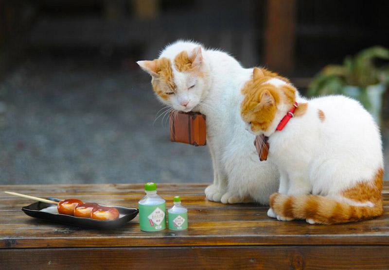 Nyalan_jalan_cats_05