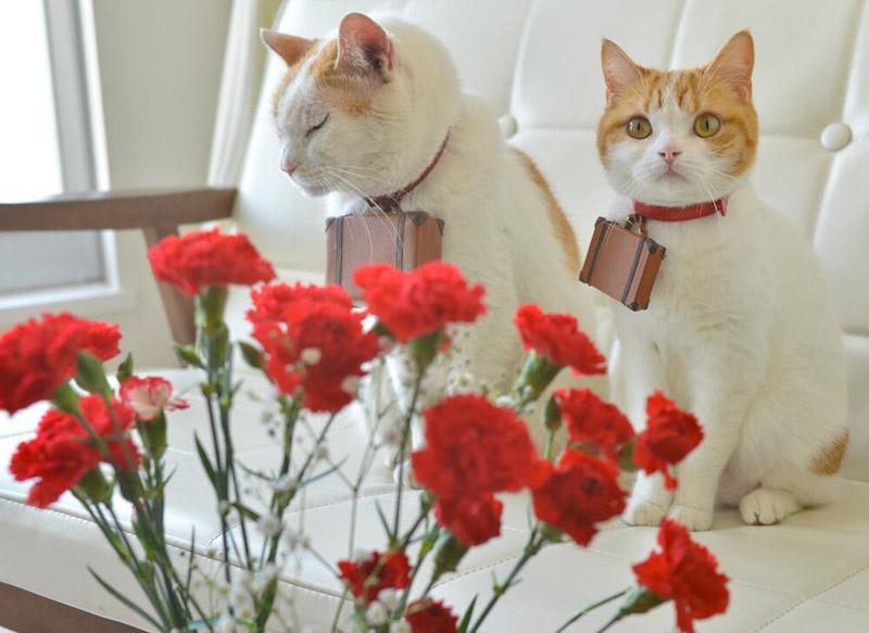 Nyalan_jalan_cats_06