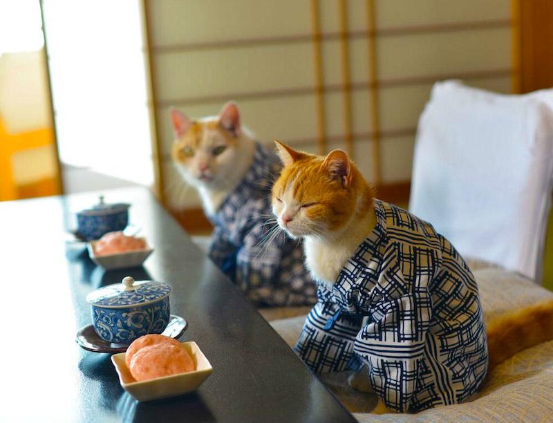 Nyalan_jalan_cats_10
