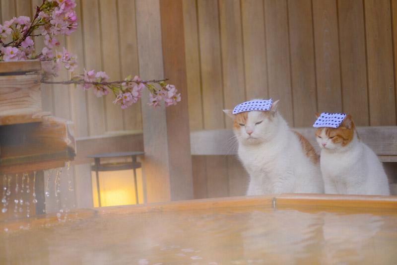 Nyalan_jalan_cats_11