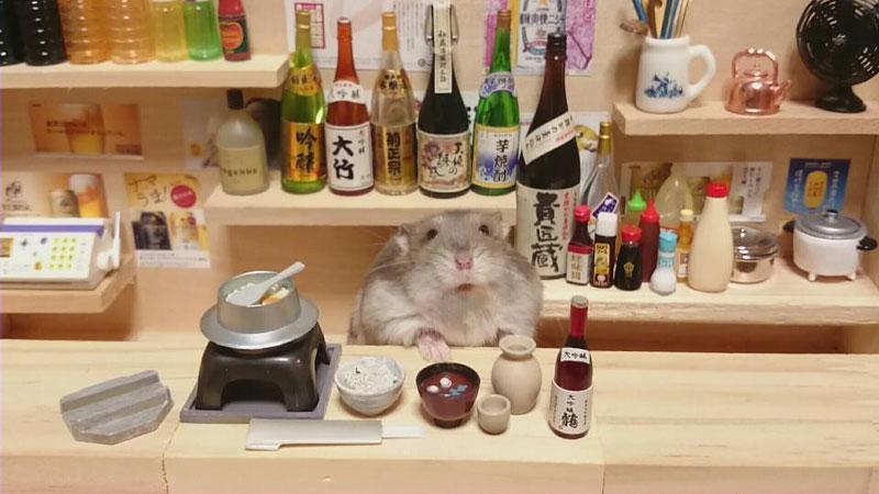 hamster-kawanabesatou-01