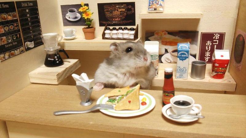 hamster-kawanabesatou-06