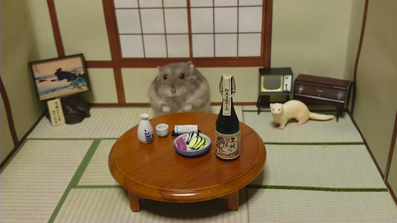 hamster-kawanabesatou-07