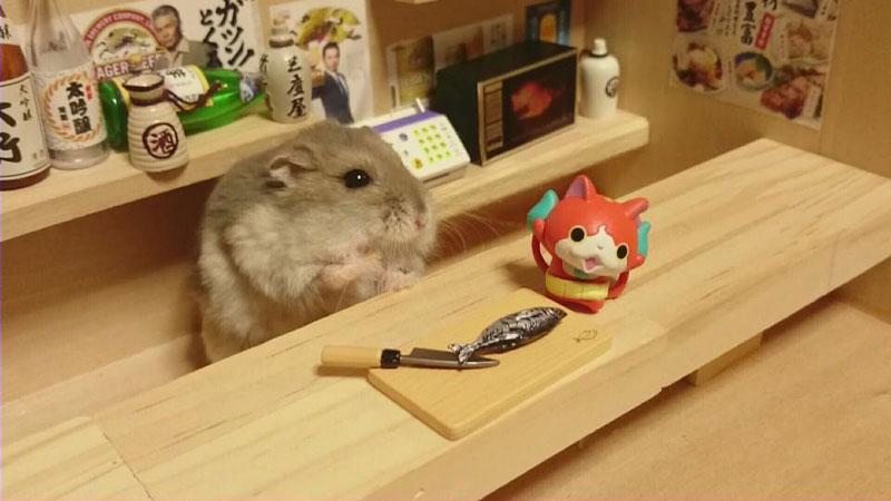 hamster-kawanabesatou-08