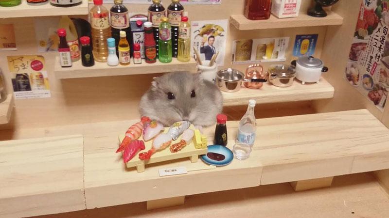 hamster-kawanabesatou-09