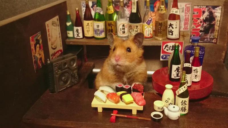 hamster-kawanabesatou-10