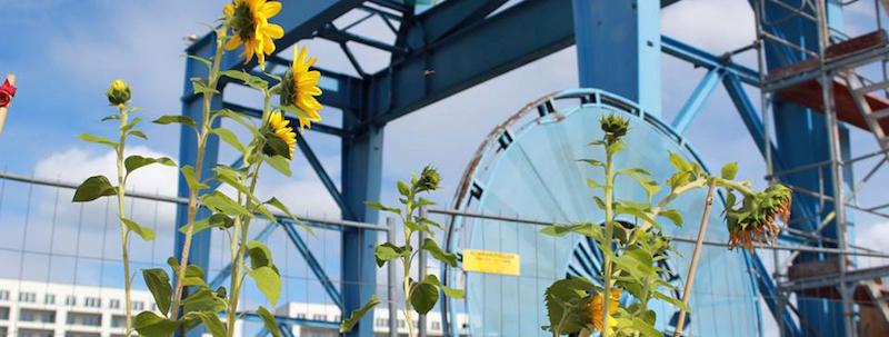 Frankfurt-tipp-juli-wochenende-hafengarten-offenbach