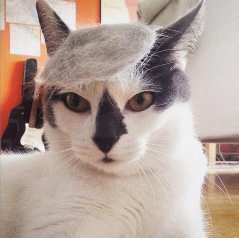instagram-trumpyourcat-09