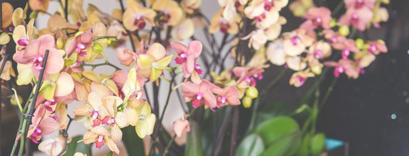 Frankfurt-tipp-oktober-wochenende-palmengarten-orchideen